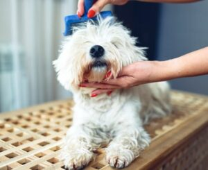 vachtverzorging hond